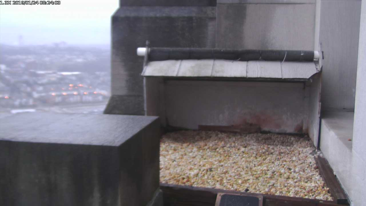 Peregrine Nest, Gulf Tower Pittsburgh
