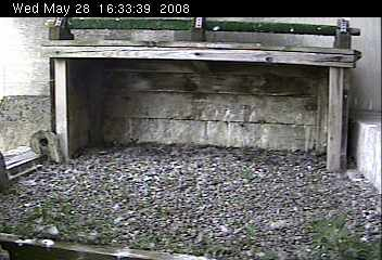 Empty nest at Gulf Tower (from the National Aviary webcam)