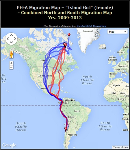 5-year map of arctic peregrine -- Island Girl -- migration routes (map from Southern Cross Peregrine Project)