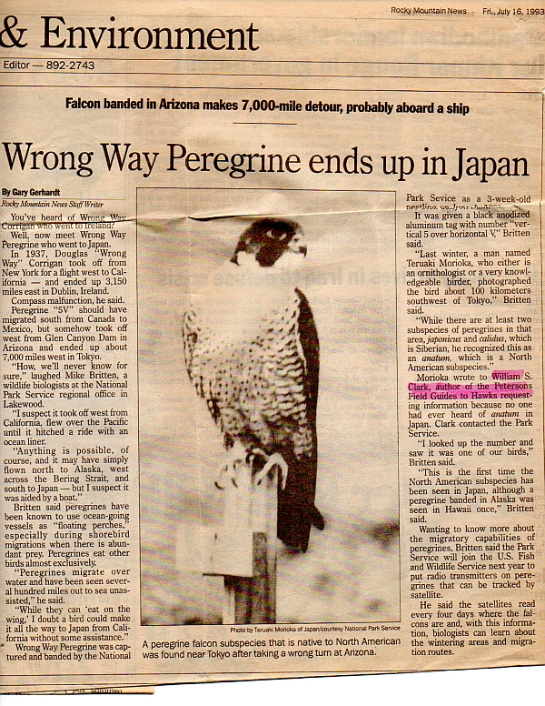 U.S. Peregrine ends up in Japan (photo of article by Gary Gerhardt in the Rocky Mountain News, July 16, 1993)