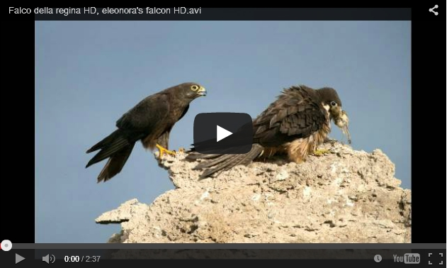 Screenshot of Falco della regina (screenshot from YouTube)