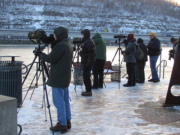 Watching gulls at the Point, Pittsburgh, PA Jan 31, 2015 (photo by Tim Vechter)